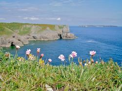 Wild Flowers in Pembrokeshire